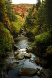 Fall folliage and river. River goring through the forest stock photos