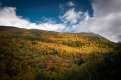 Fall folliage from white mountains. New Hampshire`s White mountains yellow forest at fall royalty free stock photos