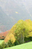 Fall forest. In the Pyrenees Royalty Free Stock Photos