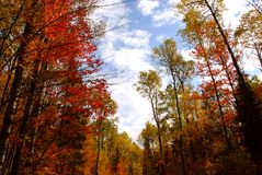 Fall forest royalty free stock image