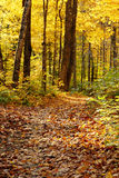 Fall in forest Royalty Free Stock Image