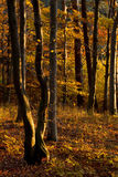 Fall Forest Stock Photo