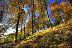 Fall in the forest Stock Photo