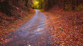 Fall forest ant tiny road Stock Photography