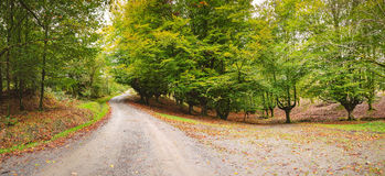 Fall forest, autumn Stock Image