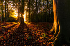 Fall Forest. The autumn sun Shines through the forest Stock Image