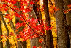 Fall forest background Royalty Free Stock Photography