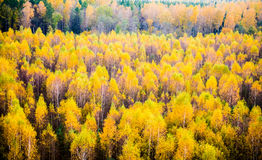 Fall forest Royalty Free Stock Photography