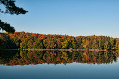 Fall Forest. Colorful fall forest in Haliburton Ontario Canada royalty free stock image