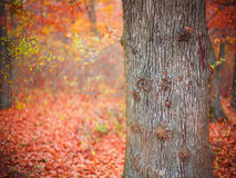 Fall forest colors Stock Images