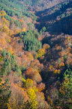 Fall in the forest Royalty Free Stock Photos