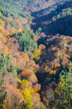Fall in the forest Royalty Free Stock Photo