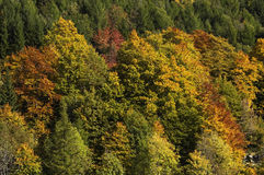 Fall Forest Stock Image