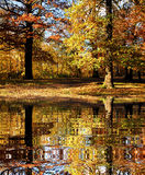 Fall forest with digital pond Royalty Free Stock Images