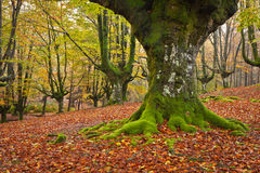 Fall in the forest Stock Images