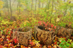 Fall Forest Floor Royalty Free Stock Images