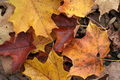 Fall Forest Floor Up Close Stock Image