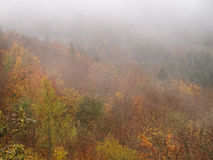 Colorful fall forest by fog ascending. Aerial view over a mixed forest in the Swabian Alb, Germany, with fog ascending. Landscape at fall Royalty Free Stock Photos