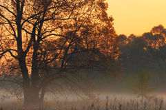 Fall forest, fog, morning, evening, bright yellow sun. Rare beau Royalty Free Stock Images