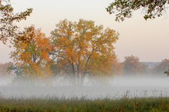 Fall forest, fog, morning, evening, bright yellow sun. Rare beau Stock Photography