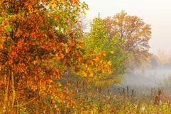 Fall forest, fog, morning, evening, bright yellow sun. Rare beau Royalty Free Stock Image