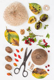 Fall Forest Goodies. On a White Background Royalty Free Stock Photo