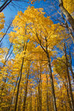Fall Forest in HDR Stock Photo