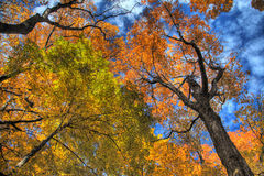 Fall Forest in HDR Stock Images