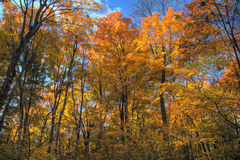 Fall Forest in HDR Royalty Free Stock Photography