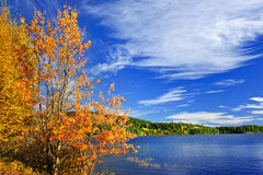 Fall forest and lake Royalty Free Stock Images
