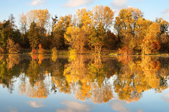 Fall, forest, lake Royalty Free Stock Photography