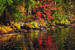 Fall forest and lake shore Royalty Free Stock Photos