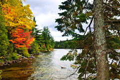 Fall forest and lake shore Stock Photo
