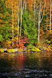 Fall forest and lake shore Stock Image