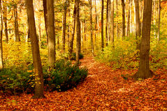 Fall forest landscape Stock Image