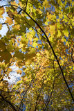 fall forest leaves Στοκ φωτογραφία με δικαίωμα ελεύθερης χρήσης