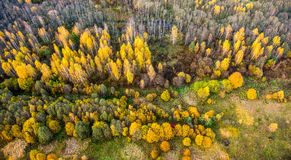 Fall forest Lithuania Royalty Free Stock Image