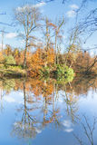 Fall forest with mirror image in water Stock Image