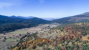 Fall forest nature. Fall / Forest / Aerial photogrpahy / Taken with my drone royalty free stock photos