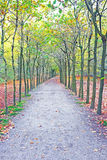 Fall in the forest in Netherlands Stock Photos