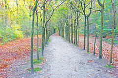 Fall in the forest in Netherlands Royalty Free Stock Photos