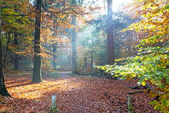 Fall in the forest from Netherlands Royalty Free Stock Photos