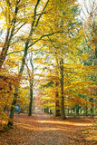 Fall in forest in the Netherlands Stock Photos
