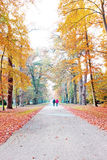 Fall in forest in Netherlands Royalty Free Stock Image