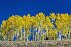 Fall forest in October Idaho Stock Image