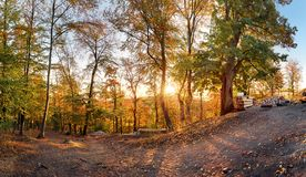 Fall in forest - panorama at sunset royalty free stock images