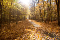 Fall forest park in Canada. Fall forest with colorful autumn leaves Royalty Free Stock Photography