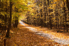 Fall forest park in Canada. Fall forest with colorful autumn leaves Royalty Free Stock Image