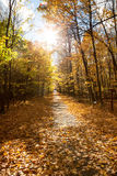 Fall forest park in Canada Royalty Free Stock Photo