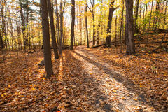 Fall forest park in Canada. Fall forest with colorful autumn leaves Stock Images